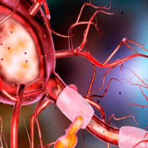 Circuito nervioso