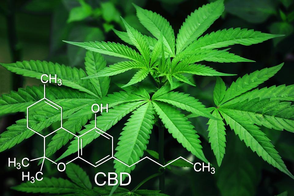 Marihuana es medicinal
