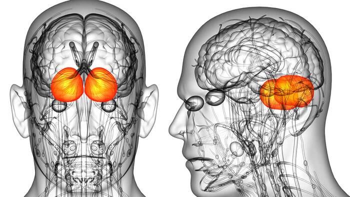 Depresión: según estudios, puede afectar físicamente al cerebro