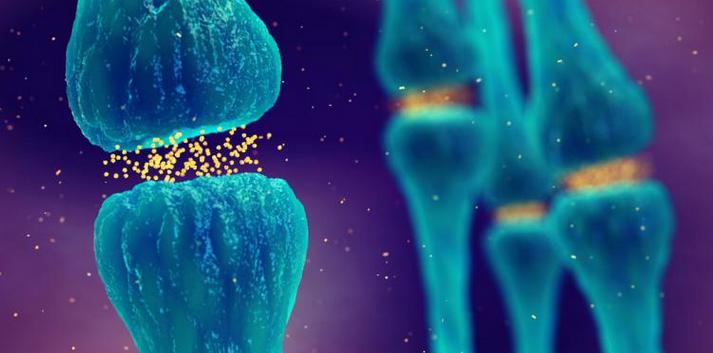 Reparar la sinapsis, una potencial terapia para la esclerosis múltiple