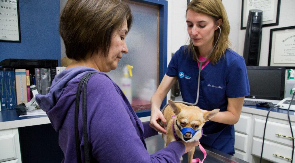 El riesgo de suicidio en veterinarios es el doble que en otros sanitarios